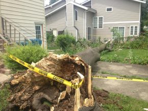 Timber! Resident Reaction to Saturday's Storm Highlights Maywood's Dead Tree Problem