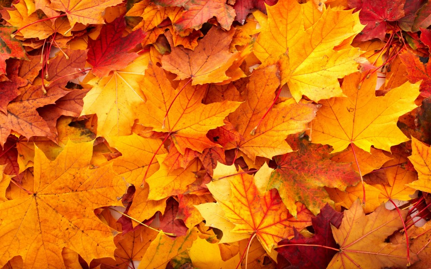 fall-leaves1.jpg