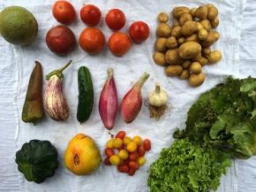 Organic Veggie Boxes, Cooking Classes and Farm Visits Offered Right Out of Maywood